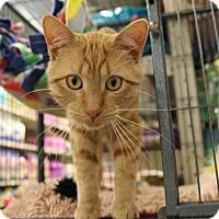 Adopt A Pet :: Dorito - Rochester, MN