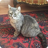 Adopt A Pet :: Elora - Toronto, ON