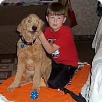 Adopt A Pet :: Jasper - Hamilton, ON