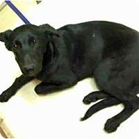 Adopt A Pet :: Diane - URGENT FOSTER NEEDED - Seattle, WA