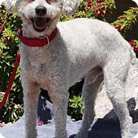 Adopt A Pet :: Clancey - Gilbert, AZ