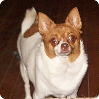Adopt A Pet :: Katie - Greensboro, GA