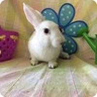 Adopt A Pet :: Vanilla - Paramount, CA