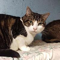 Adopt A Pet :: Benny - Brainardsville, NY