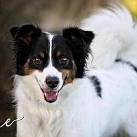 Adopt A Pet :: Ace - Joliet, IL