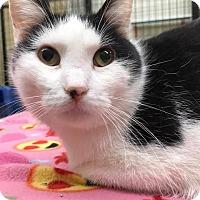 Adopt A Pet :: Max - Maryville, MO