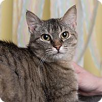 Adopt A Pet :: Tess - Wilmington, DE