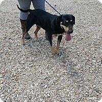 Adopt A Pet :: Jake - Hammond, LA