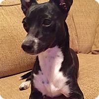 Adopt A Pet :: CeeCee - Irvine, CA