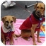 Photo 2 - Beagle Mix Dog for adoption in Tustin, California - Kingsley and Stanley