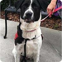 Adopt A Pet :: Snoopy - Dundee, FL