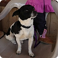Adopt A Pet :: Oreo - Red Bluff, CA