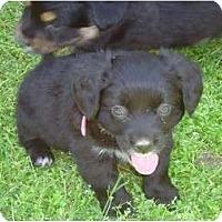 Adopt A Pet :: Ke$ha - Arlington, TX