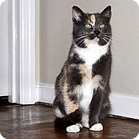 Adopt A Pet :: Callie - Xenia, OH