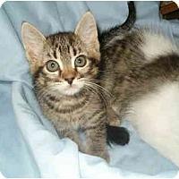 Adopt A Pet :: Violet - Keizer, OR