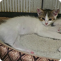 Adopt A Pet :: Freddie - Dover, OH