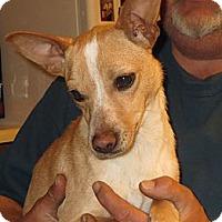Adopt A Pet :: Sammy - Rochester, NY