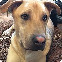 Adopt A Pet :: Georgie - Los Angeles, CA