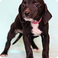 Adopt A Pet :: Neila - Waldorf, MD