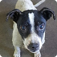 Adopt A Pet :: Gladys - Woodland, CA