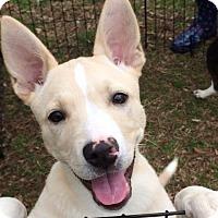 Adopt A Pet :: Zoe - Glastonbury, CT