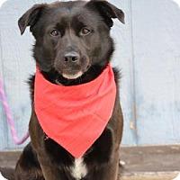 Adopt A Pet :: Sodapop - Yucaipa, CA