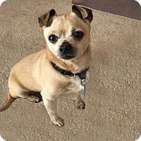Adopt A Pet :: Tito - Pleasanton, CA