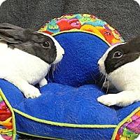 Adopt A Pet :: Tessa and Shasta - Newport, DE