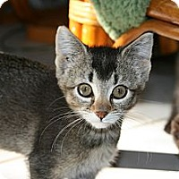 Adopt A Pet :: Abby & Ambrose - Arlington, VA