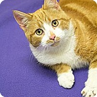 Adopt A Pet :: Marty Malloy - Chicago, IL