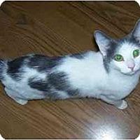 Adopt A Pet :: Lucky - Odenton, MD