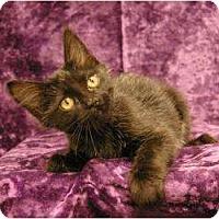 Adopt A Pet :: Leander - Sacramento, CA