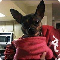 Adopt A Pet :: Tini - Windham, NH