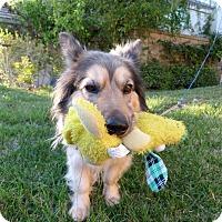 Adopt A Pet :: Gwennie - La Habra, CA