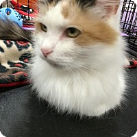 Adopt A Pet :: Gabby - Harrisburg, NC