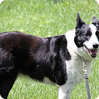Adopt A Pet :: Lady - Midwest (WI, IL, MN), WI
