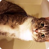 Adopt A Pet :: Copper - Nolensville, TN