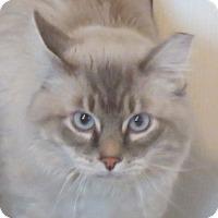 Adopt A Pet :: Cerulean - Davis, CA