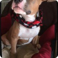 Adopt A Pet :: Narnia - Greensboro, GA
