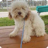 Adopt A Pet :: A010435 - Rosenberg, TX