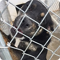 Adopt A Pet :: Kate - Aurora, MO
