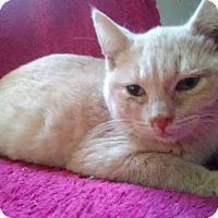 Adopt A Pet :: Ciro - McDonough, GA