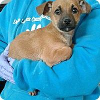Adopt A Pet :: Bennett - Ozone Park, NY
