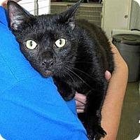 Adopt A Pet :: Bartholemew - Brooklyn, NY