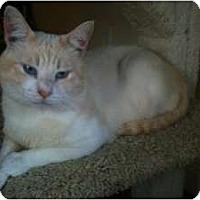 Adopt A Pet :: Omar - Sacramento, CA