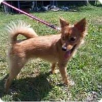 Adopt A Pet :: Ellie - Chesapeake, VA