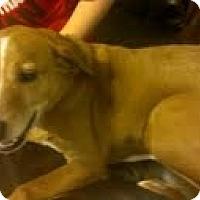 Adopt A Pet :: Buddy - Justin, TX