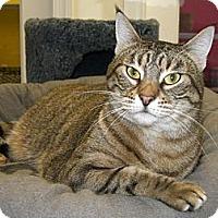 Adopt A Pet :: Nala - Jupiter, FL