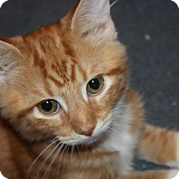 Adopt A Pet :: Milo (LE) - Little Falls, NJ