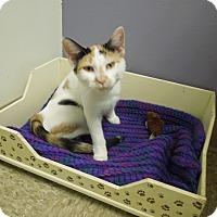Adopt A Pet :: Quinn - Medina, OH